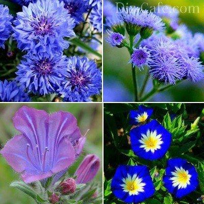 Цветник в сине-фиолетовых оттенках