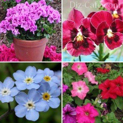 Цветы для клумбы