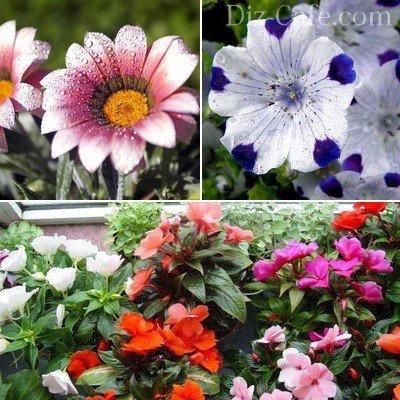 Клумбы цветы