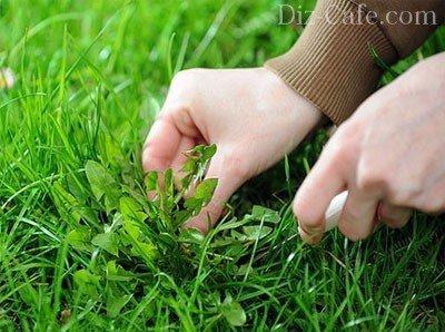 Ручное выпалывание сорняков