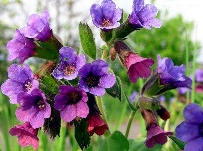 Цветы какой группы можно выращивать и дома и в саду