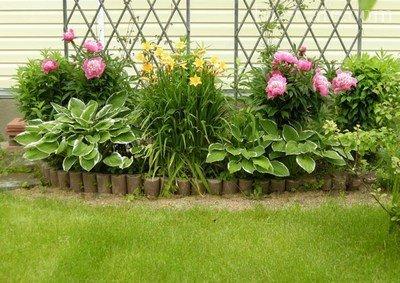 где посадить лилии на садовом участке фото