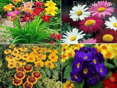 Фото летних цветов для сада