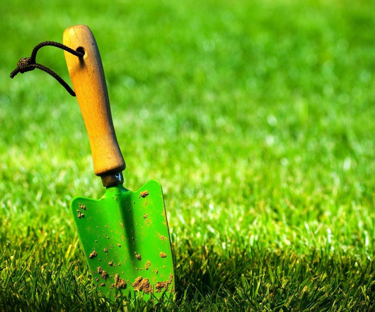Борьба с сорняками на газоне: обзор методов защиты газонной травы