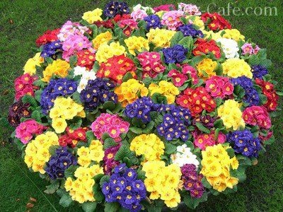 Как разбить красивый цветник перед
