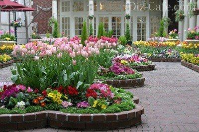 Постоянно цветущие клумбы