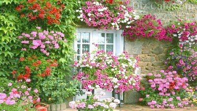 Место для цветника