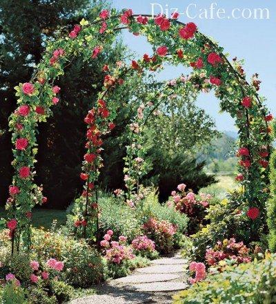 Арки из роз