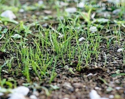 Посев газона на зиму