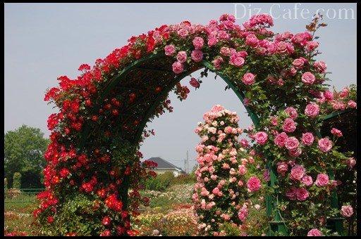 Арка для дачи для цветов своими руками фото 562