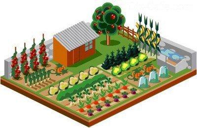 севооборот на огороде схема