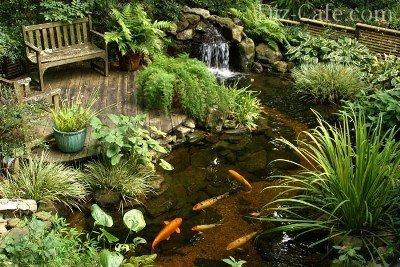 Чистый пруд
