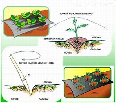Схема использования нетканого укрывного материала от сорняков