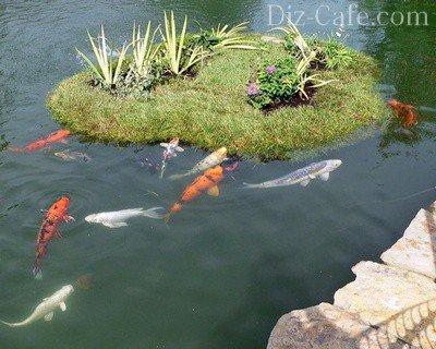 Рыбки и островок