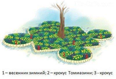 Цветник «Солнечные краски»