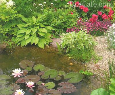 Болотце, украшенное водными лилиями