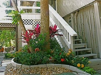 Нарядный цветник во дворе