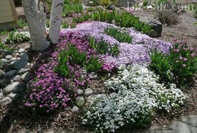Клумба с весенними цветами