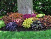 Как разбить цветник на склоне: обустройство наклонной цветочной поляны 3