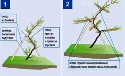 Техника формовки дерева