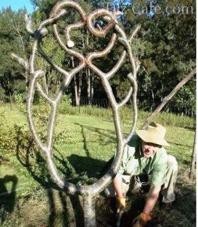 Дачный дизайн с экзотикой: техника создания арбоскульптур из деревьев
