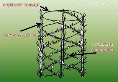 Арбоскульптура спираль
