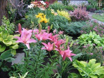Лилии в окружении кустарников и вечнозеленых растений