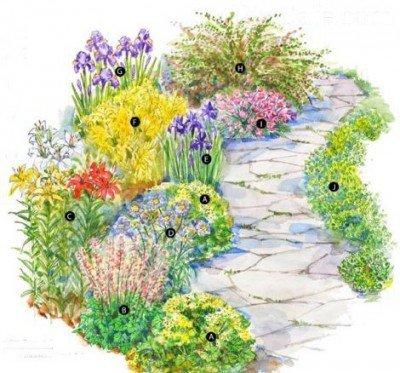 С какими цветами посадить розы на клумбе фото 53