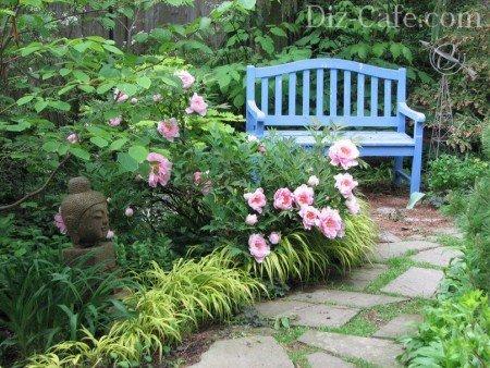 Розовые пионы у скамейки