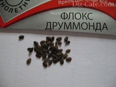 Семена флокса