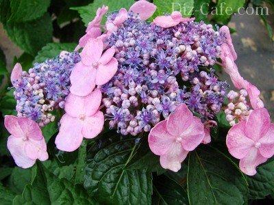 Разные цветки в соцветии
