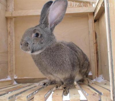 Как сделать крольчатник своими руками: планирование и устройство