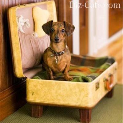 Чемодан для собаки