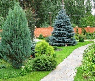 разновидность елок фото и названия