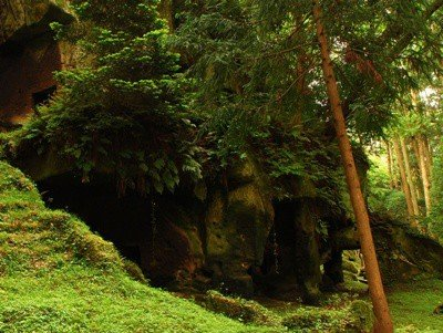 Мох в хвойном лесу