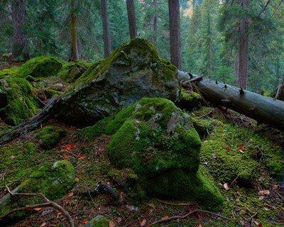 Почва из лесу