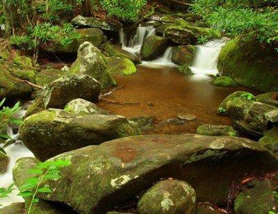 Сад мхов с водоемом