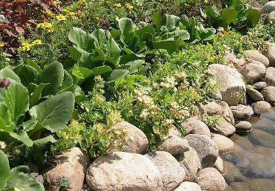 Растения у ручья