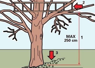 На каком дереве построить домик