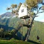 Разновидности домиков на дереве для строительства