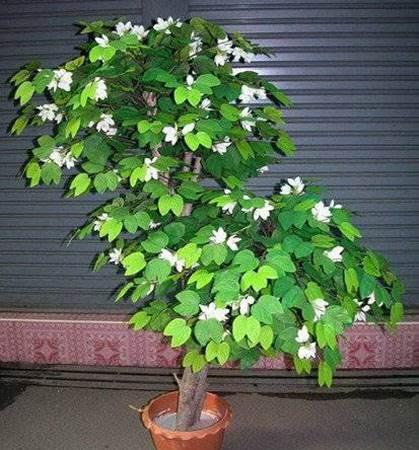 Деревья семенами  profisemenaru
