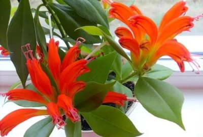 Цветы крупно