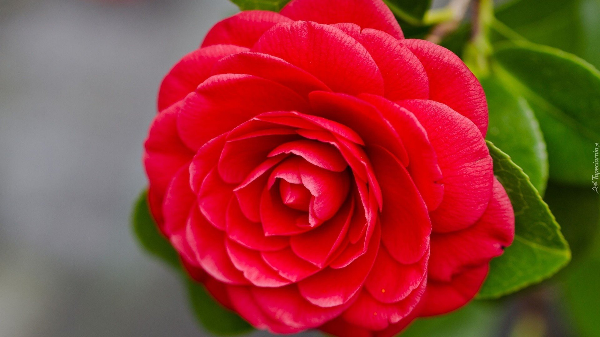 Фото самых красивых цветов с названиями