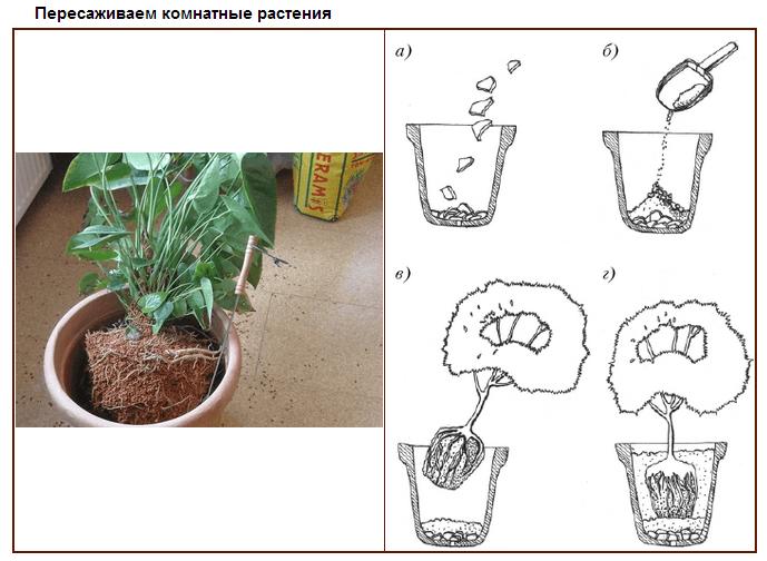 Как сажать комнатные растения