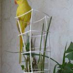 Попугай и циперус