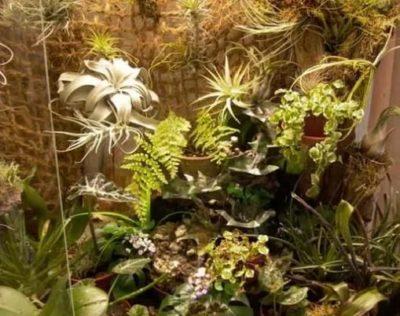 Зелёная витрина с тропическими растениями