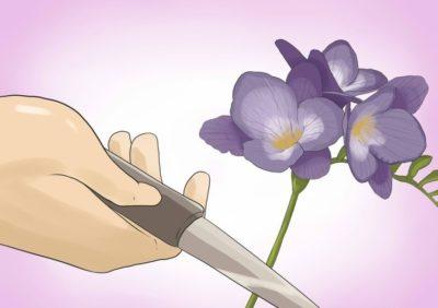 Срез цветоноса