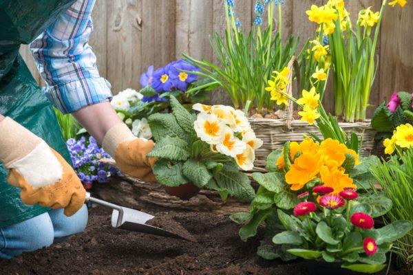 Какие цветы лучше посадить в саду и на даче: общие советы и рекомендации – Дизайн Кафе