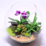 Композиция из папоротника и орхидеи
