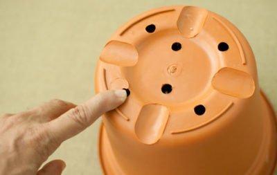Пластиковый горшок для нефролеписа с отверстиями в донышке